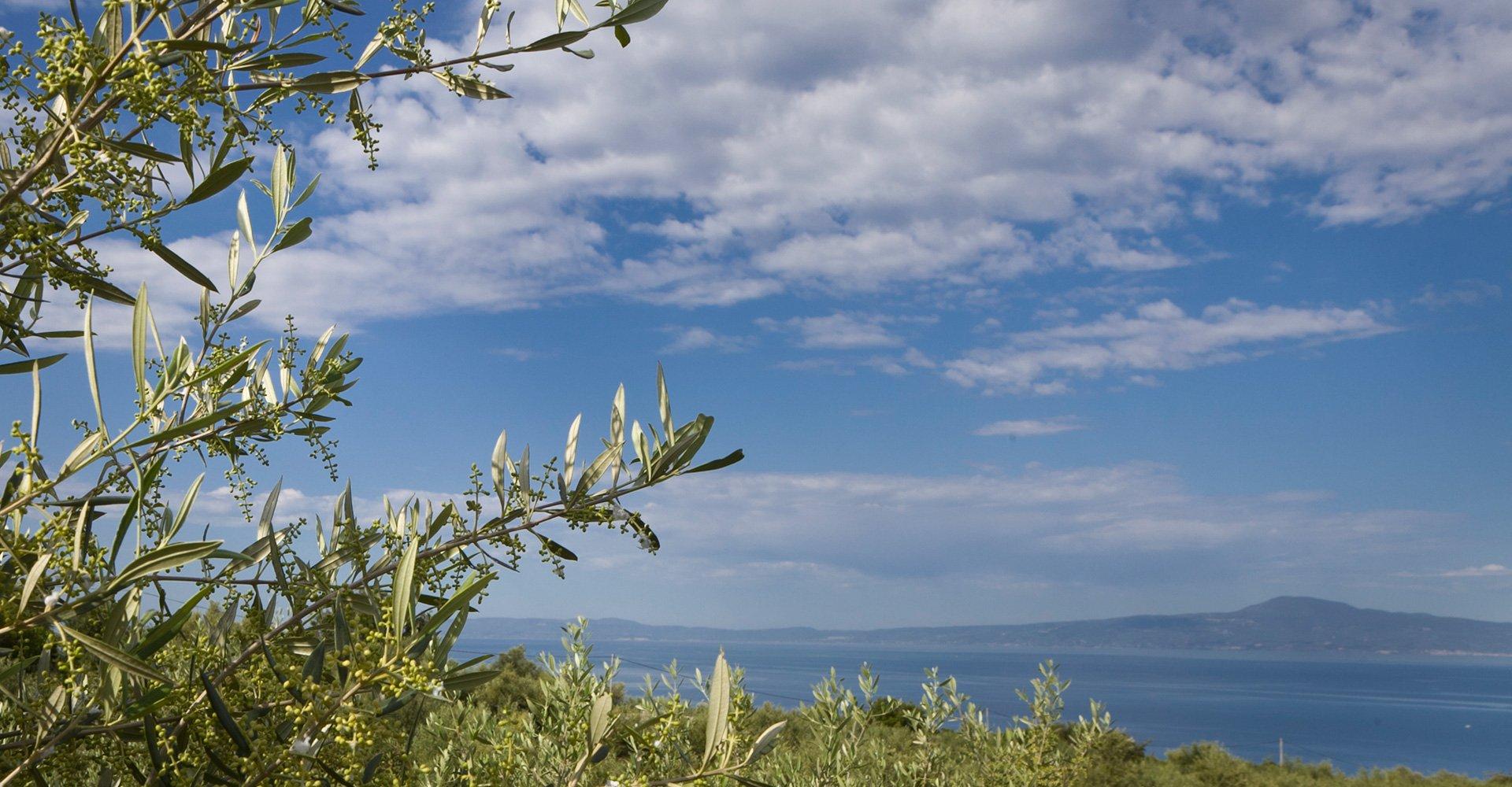 mesinia-greece